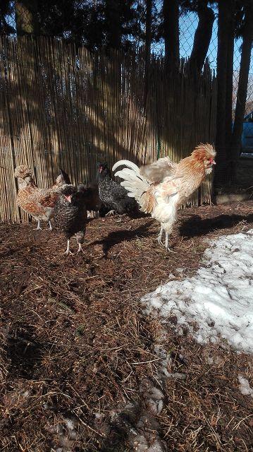 Lemmy und seine Chicks