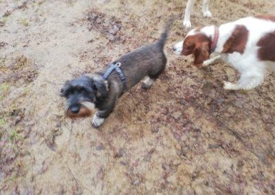 Eindrücke aus der Hundebetreuung