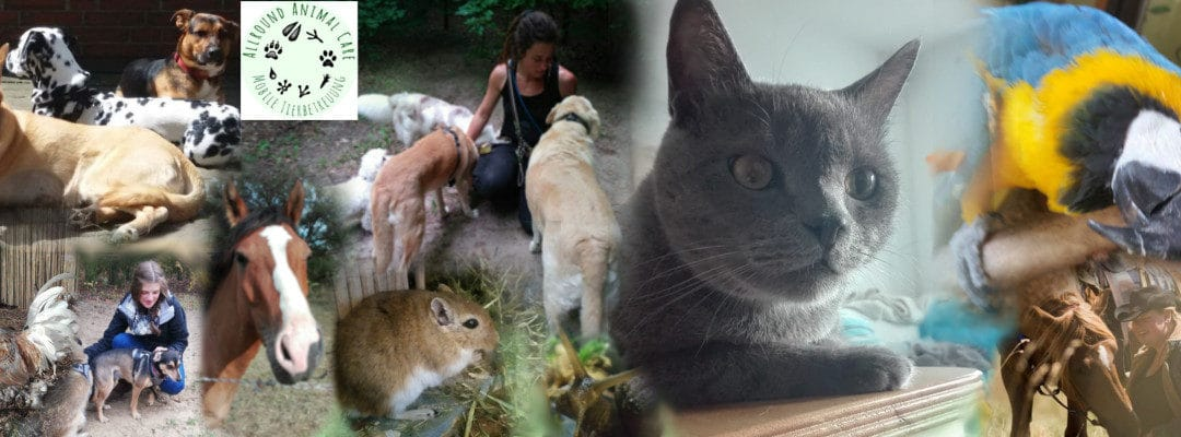 Was macht eine gute Tierbetreuung aus, wie erkenne ich einen seriösen Betreuer?
