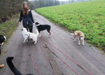 Esther inmitten von Hunden