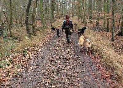 Hundespaziergang im Wald