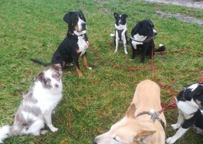 Hundespass in Wald. Wiese und Feld