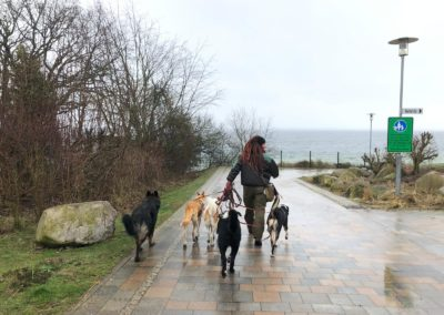 Geordnete Hundegruppe auf dem Weg zum Strand