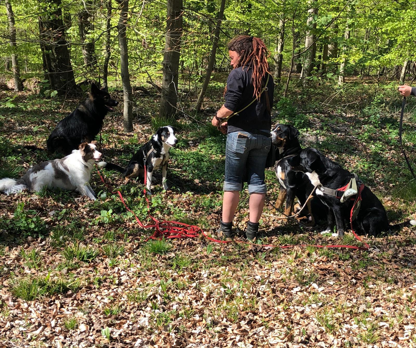 Dogwalkerin mit Hunden