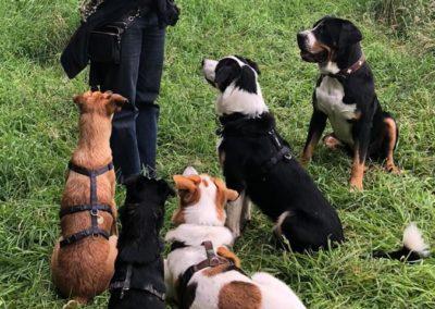 Luise Reis mit Hundegruppe
