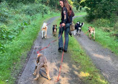 Dogwalkerin mit Hundegruppe