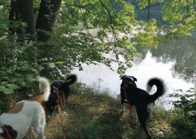 Hunde an einem See