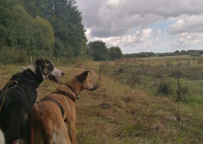 Dog Walk im Curauer Moor